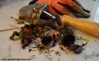 Fall Gardening – Thinking Ahead to Next Spring