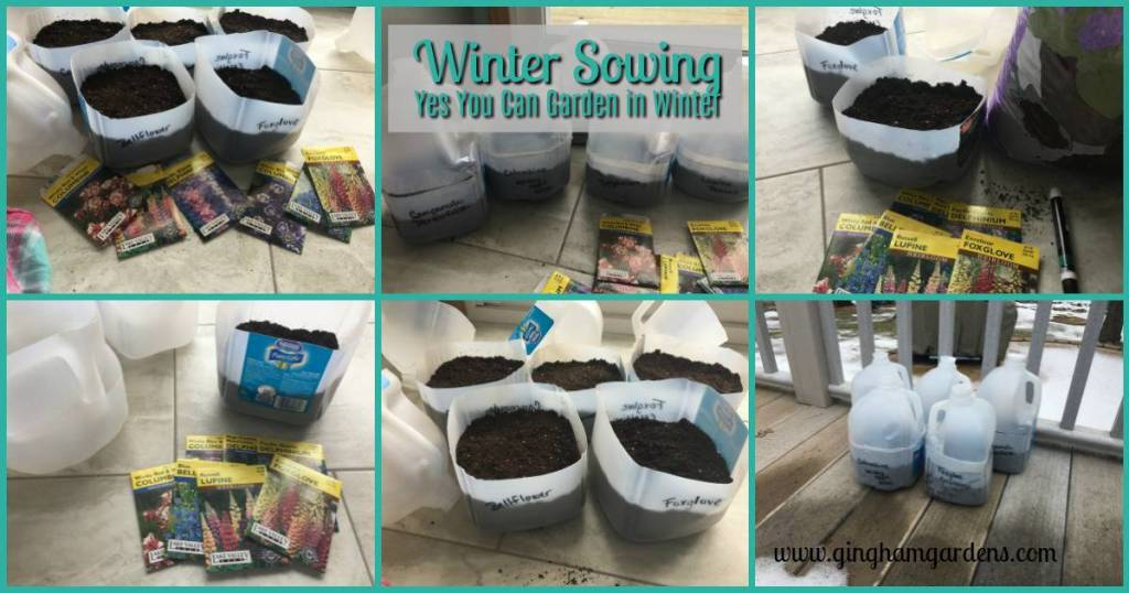 Winter Sowing at Gingham Gardens