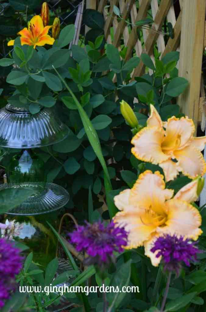 Minnesota Flower Gardens | Perennial Gardening | Flower Gardening Ideas