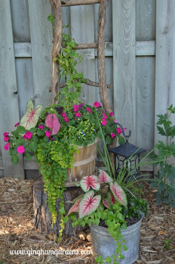 Garden Vignette with Ladder Made from Tree Limbs
