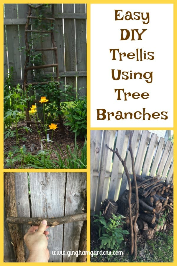 Easy DIY Trellis Using Tree Branches