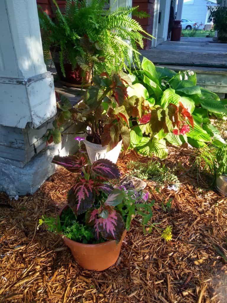 Readers\' Garden Tour - Gingham Gardens