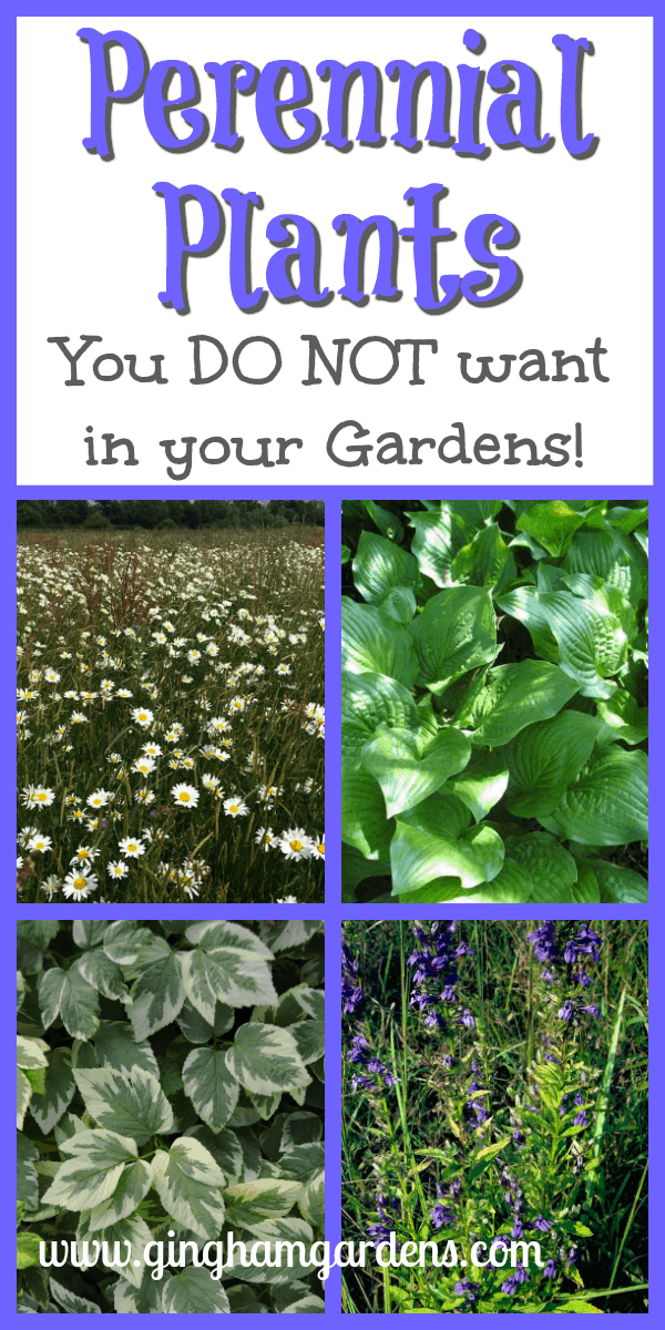 Perennial Plants You Do Not Want In Your Garden