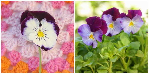collage pansy