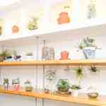 Succulents - a must go place in Cornwall if you love succulents