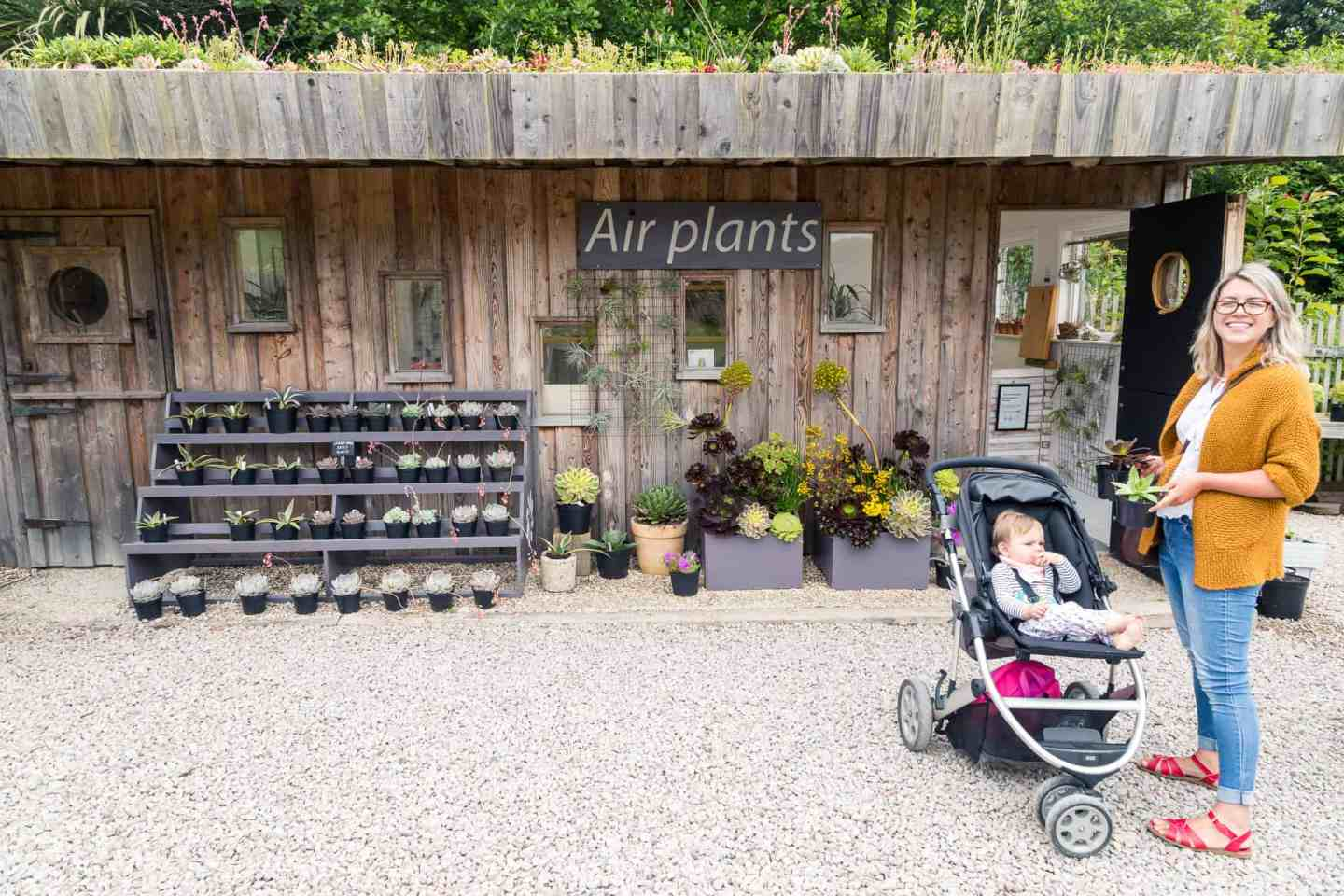 Great place for families to visit in Cornwall at Surreal Succulents