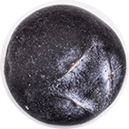 Juniperus Communis Gin Italy c