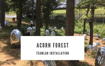 Sakura Town Acorn Forest