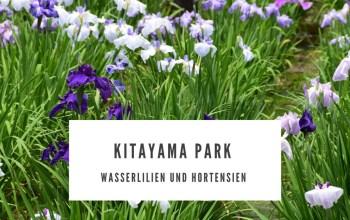 Kitayama Park – Wasserlilien und Hortensien bestaunen