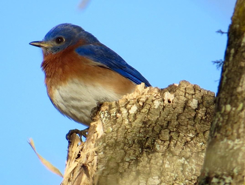 Burton Birds Revisited  ginnybirdbeakspeak