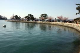 jinhae-cherry-blossom-festival-6