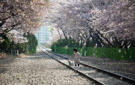 tempat-menarik-di-korea-13