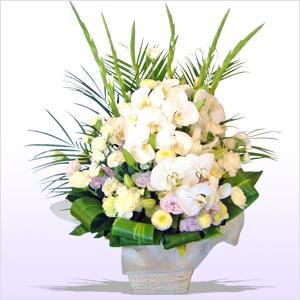 花の畫像について: 驚くばかり白い 蘭