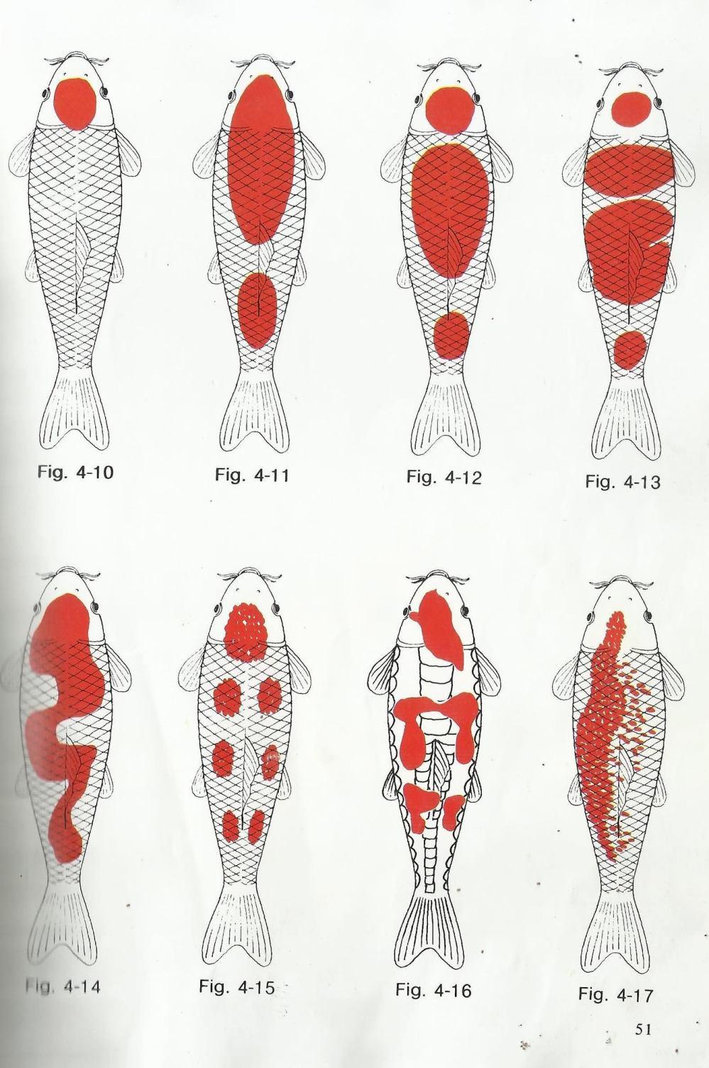 medium resolution of different types of kohaku koi and goldfish breeding tips giobel koi center