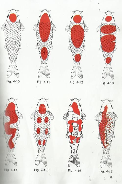 small resolution of different types of kohaku koi and goldfish breeding tips giobel koi center