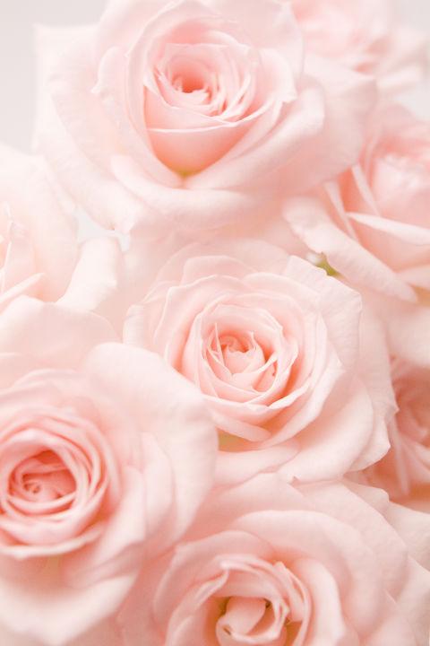 Linguaggio dei fiori scopri il significato dei colori