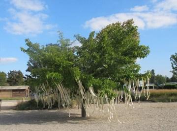 __1.arbre