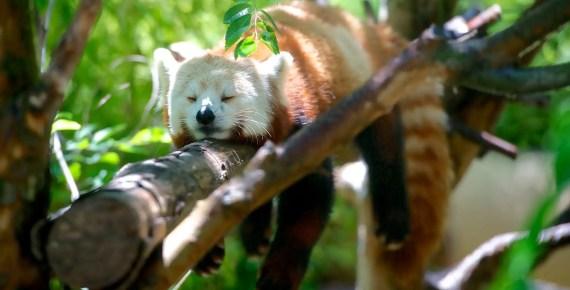 Firefox: snellire la cronologia pulendola automaticamente