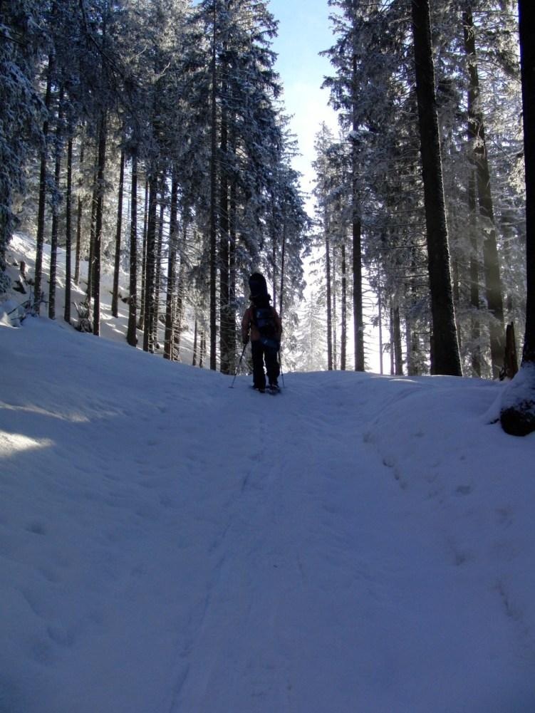 Gemäßigter Aufstieg durch den Wald © Gipfelfieber.com