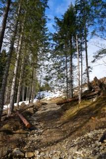 Steig zur Falkenmoosalm © Gipfelfieber.com