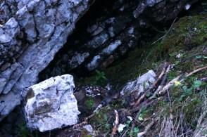 Hirschkalb am Untersberg © Gipfelfieber.com