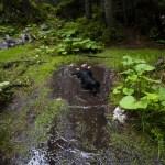 Unsere bergerfahrene Begleiterin fühlt sich sichtlich wohl © Gipfelfieber.com