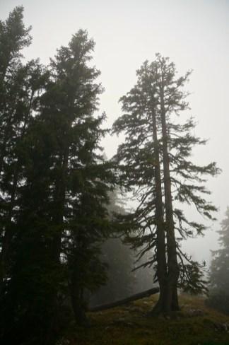 Düstere Atmosphäre am Morgen © Gipfelfieber.com