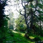 Wälder wie im Auenland © Gipfelfieber.com