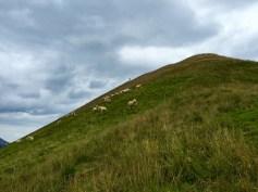 Schafe an der Bleispitze © Gipfelfieber.com