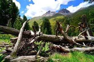Im ältesten Arvenwald der Alpen in Graubünden ©Gipfelfieber