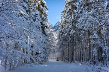 Im Wald hinter St. Bartholomä ©Gipfelfieber