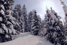 Schneeschuhwandern im Winterwunderland ©Gipfelfieber
