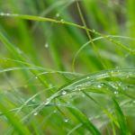 Regentropfen ©Gipfelfieber