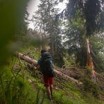 Durch den Wald ©Gipfelfieber