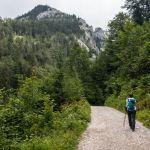 Aufstieg über Forstwege ©Gipfelfieber