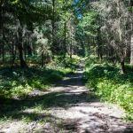 Kiefernwälder ©Gipfelfieber