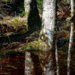 Moor ©Gipfelfieber