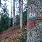 Gut erkennbare Markierungen ©Gipfelfieber
