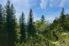 Hemmerstein lugt durch die Bäume ©Gipfelfieber