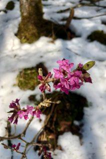 Erste Blüten ©Gipfelfieber