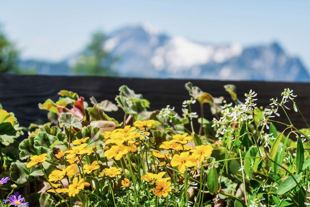 Blumenpracht an der Goiserer Hütte ©Gipfelfieber