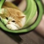 猫好きさんにではなく、ネコにプレゼントするおもちゃ特集です!