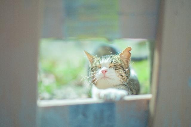 日向にいる猫