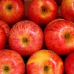 秋の贈答にピッタリ!信州長野産のりんごを使ったスイーツやジュースの贈り物6選