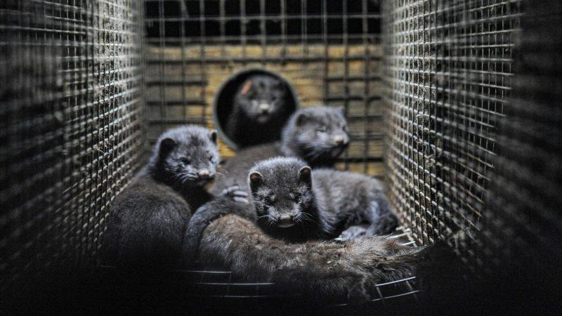 Sind Tierversuche wirklich nötig?