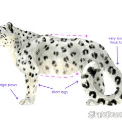 Snow Leopard Anatomy Diagram True T 23f Wiring Изображения Снежный Барс Рисунок Карандашом Поэтапно / Tonpix.ru