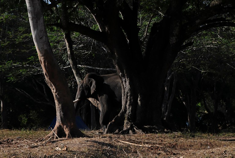 Mahut-elephant-32