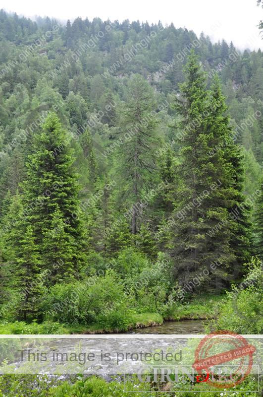Escursione laghi Stablo e Caprioli