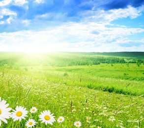 wsi-imageoptim-morning-flowers-good-morning-wallpaper.jpg