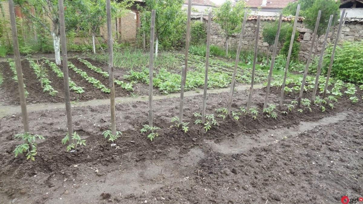 Градинарски календар: Кое кога се сади - трябва да го знаете!